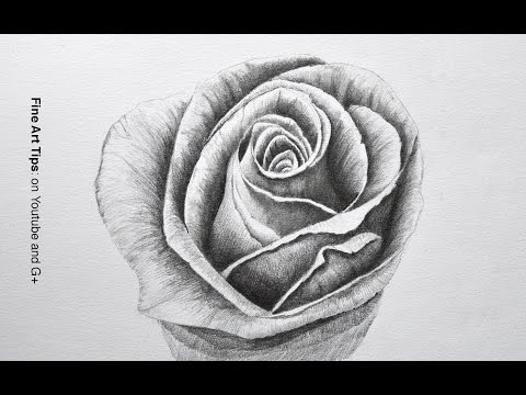 Drawing a Rose With Pencil - Time Lapse