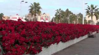 Puente de las flores de Valencia con poinsettias