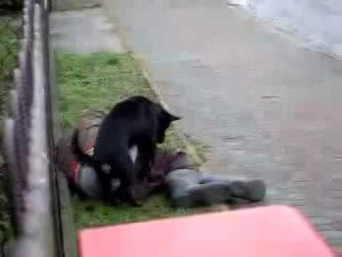 Cuidado con este perro si estan ebrios