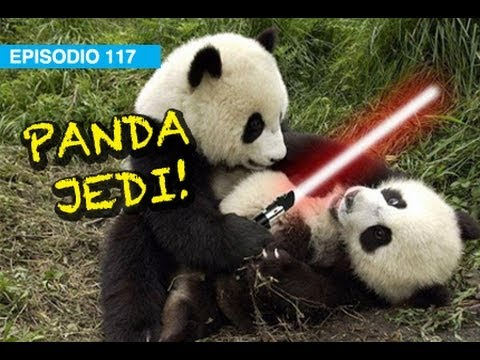 Panda Jedi! l whatdafaqshow.com