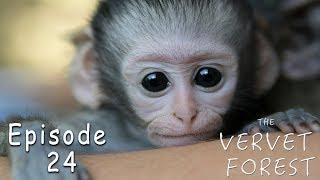 3 New Orphan Baby Vervet Monkeys Arrive At The VMF - Ep. 24