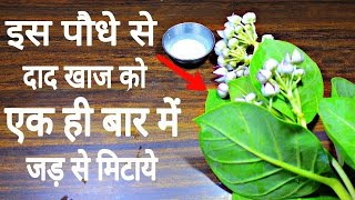 रात मे ये पौधा लगा लो सुबह तक पूराने से पूराने दाद,खाज़,खुजली गायब मिलेगे|ringworm,Dad,khaj,khujali