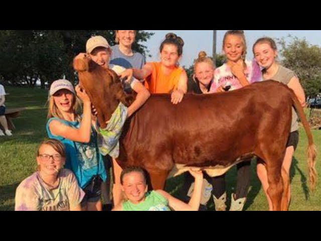 Couple Throws Birthday Party for Rescued 1-Year-Old Cow