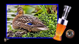 Foiles Migrators - Timber Rattler Duck Call (single reed)