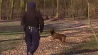 Training politiehonden | Overtreders - S01E13