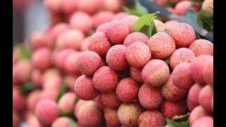 Không có tem truy xuất nguồn gốc, hoa quả Việt hết đường sang Trung Quốc chính ngạch  VTV24