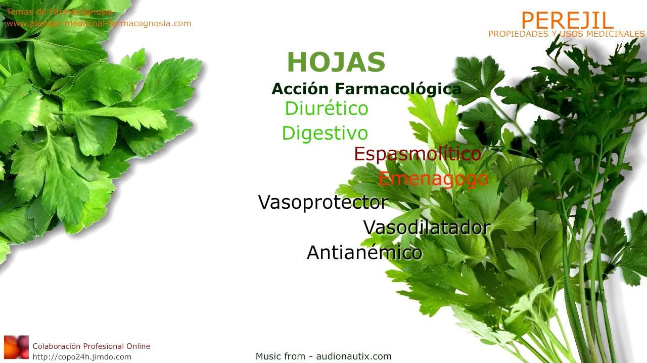 Perejil propiedades y beneficios usos medicinales del for Planta decorativa con propiedades medicinales