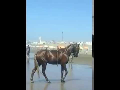 Pour les vacances : Thalasso, comme mon cheval