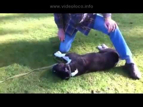 Resucita al perro con reanimacion cardiopulmonar