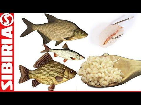 рецепты насадки для ловли рыбы