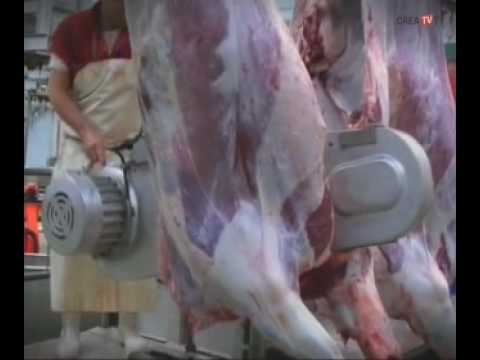 "TRACOR - Escuela de Reporteros (2ª temporada) - ""Vacas-Matadero (segunda parte)"""