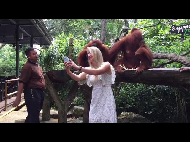 Elina Svitolina at the Singapore Zoo