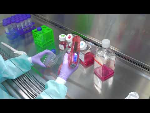Passaging Cells: Cell Culture Basics