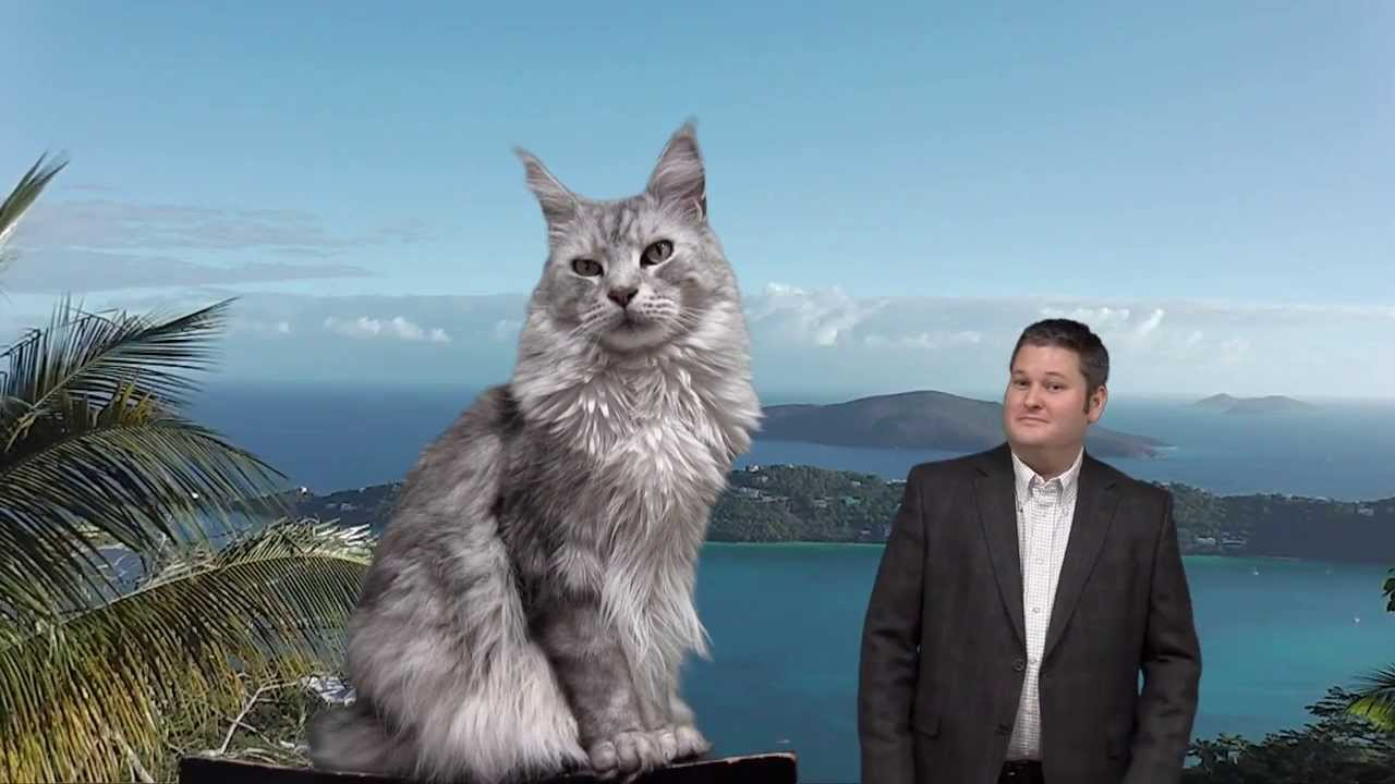 How Big Is The Biggest Cat In The World