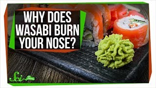 Why Does Wasabi Burn Your Nose?