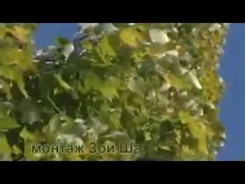 Песни дворовые - Тополя тополя все в пуху...