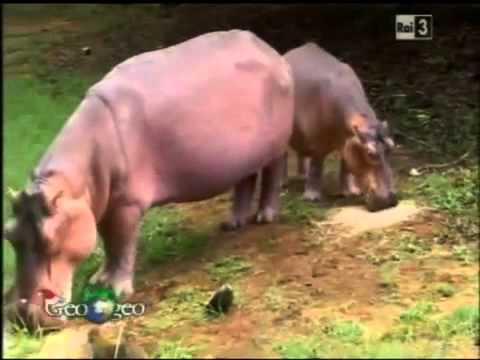 Storie speciali di amore tra animali-Quando l'amore va oltre la differenza della specie