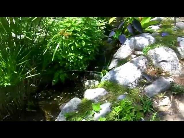 Water Garden | Enviroscape LA Landscape Design Manhattan Beach
