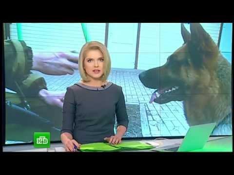 Брошенные животные Донбасса после обстрела городов. НОВОСТИ МИРА И РОССИИ. 03.03.2015