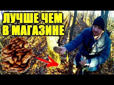 Зимний гриб от импотенции отзывы