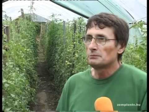 Kis kertész percek: paprika, paradicsom,  uborka