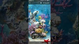 underwater coral reef live wallpaper