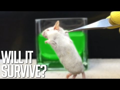 Acid Vs Mouse (Decomposition of a Mouse In Stomach Acids)