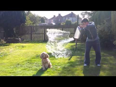 Fudge the Dog - Ice Bucket Challenge