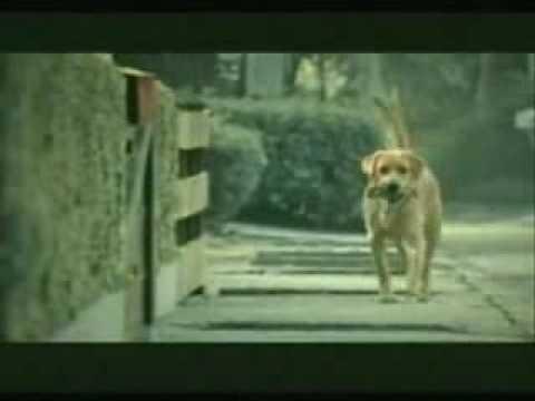 犬の演技がせつな過ぎる!何のCMかが最後までわからない動画
