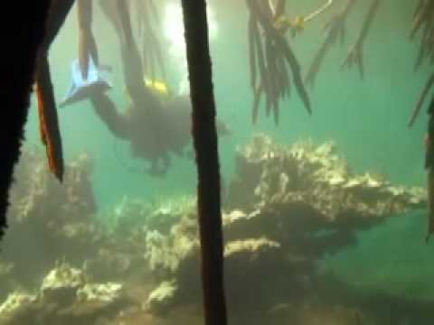 Diving the Dwarf Forest - Kosrae, Micronesia
