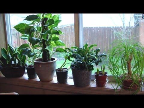 Houseplant Appreciation Day  My Easy Houseplants With Darlene