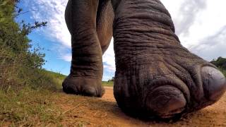 Elephant meets my GoPro..... I think he liked it!