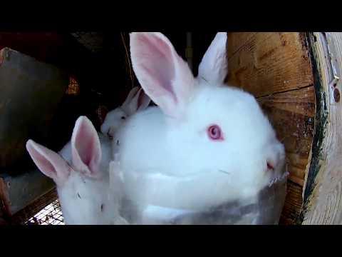 ВОТ ОНО СЕНО!  и Кормление кроликов зимой ч2