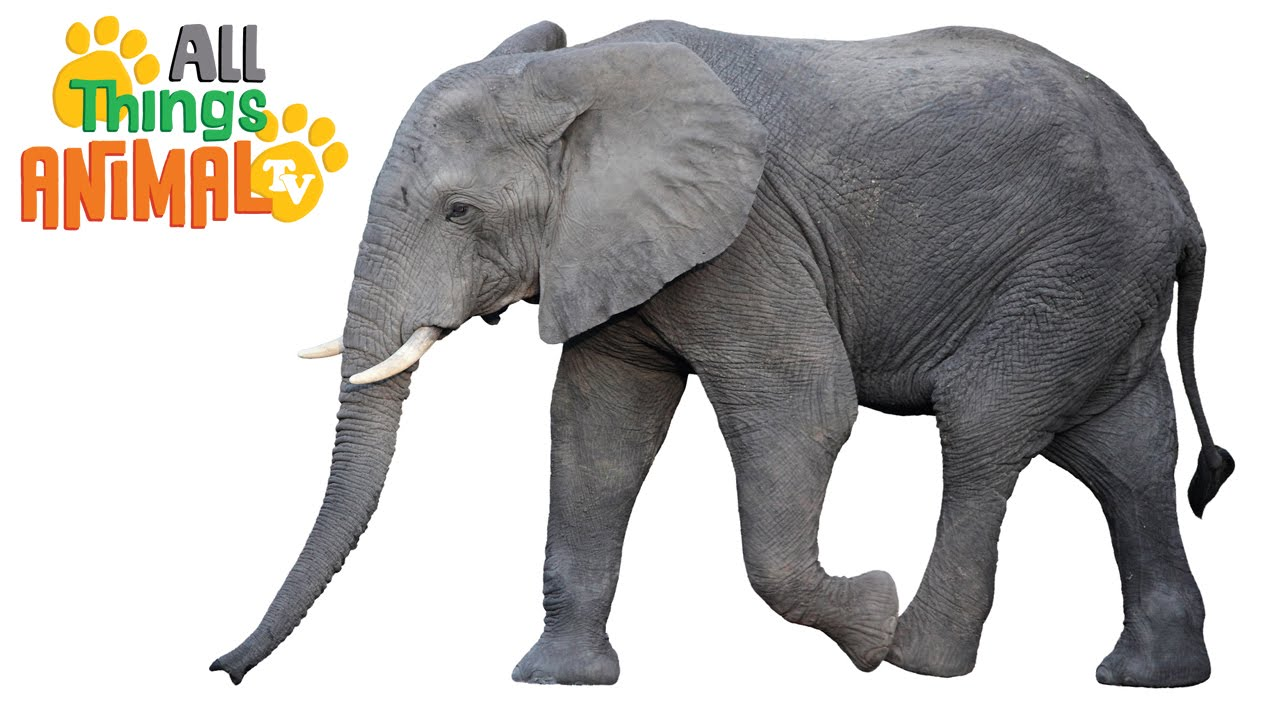 Kid Friendly Facts About Elephants