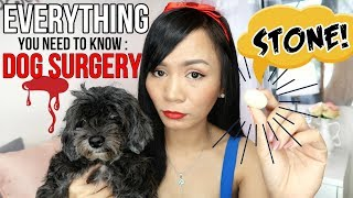 OMG! STONE IN MY DOG'S TUMMY! (Dog Kidney Stone Surgery + Treatment)