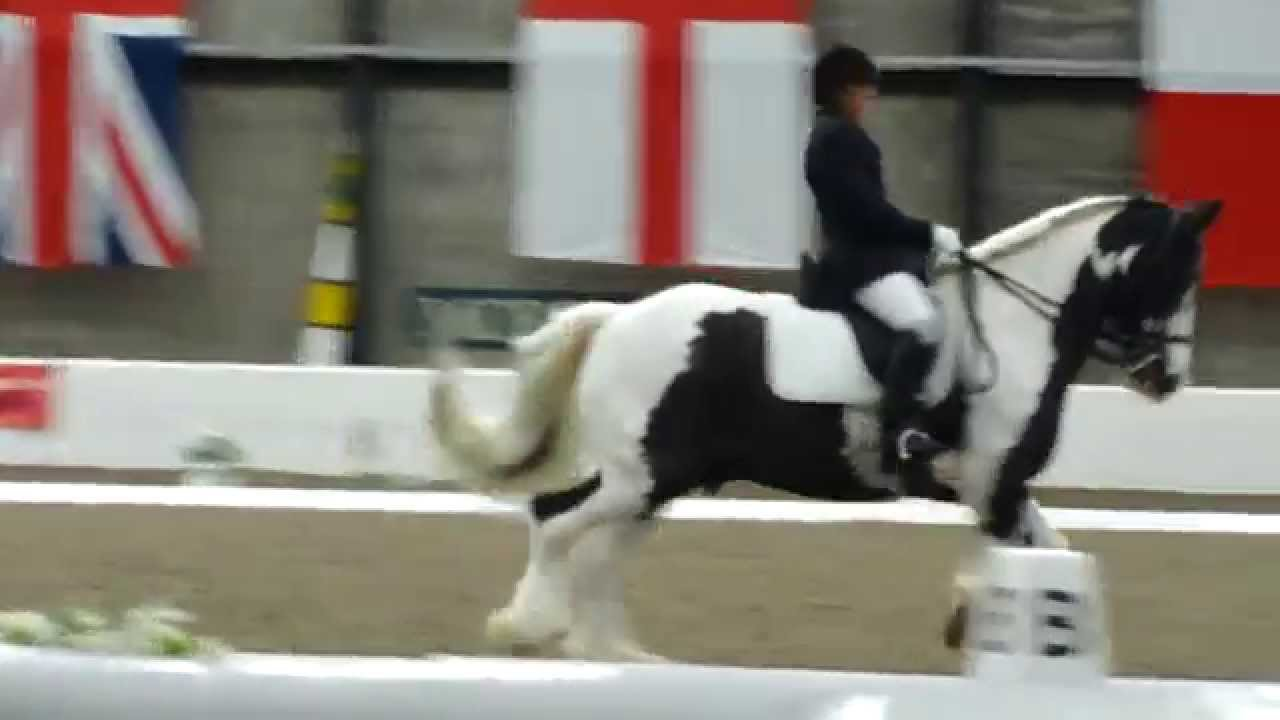Frodo at the Scottish Championships - YouTube