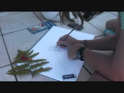 Видео как нарисовать папоротник