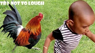 Super Cute Baby Videos - Funny Baby Videos Compilation 2019 # Babies reaction with chicken and ducks