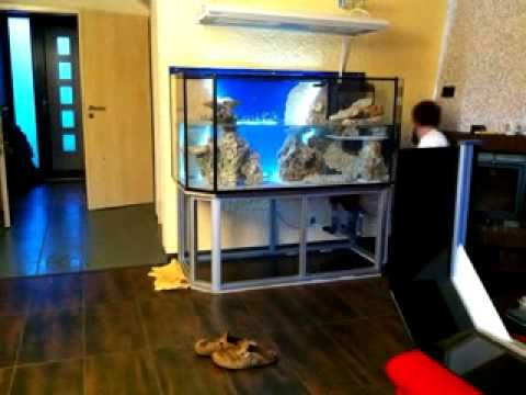 meerwasser aquarium 600liter youtube. Black Bedroom Furniture Sets. Home Design Ideas