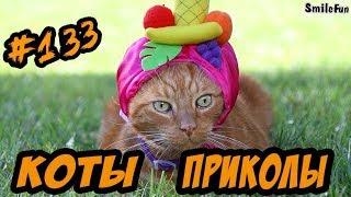 Приколы с Котами ДО СЛЁЗ Смешные коты и кошки 2018 Funny Cats