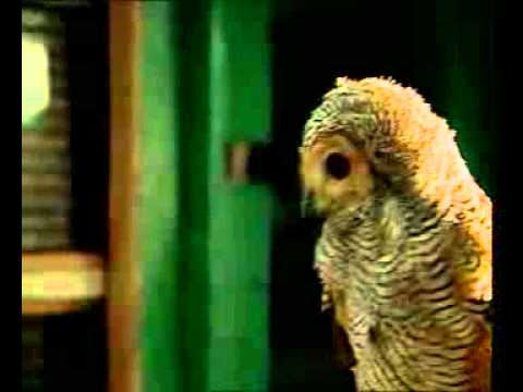 Burung Hantu - Lagu Anak-anak Indonesia - Sd 3 Megawon.flv video