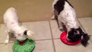 Funny Pet Videos part 3