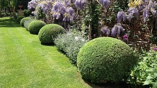 GWORLD - 001 - Topiary. care and maintenance of Buxus Sempervirens. Chiswick.