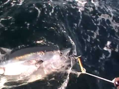 Tuna Fishing In Cape Cod Bay.... Stellwagon Bank