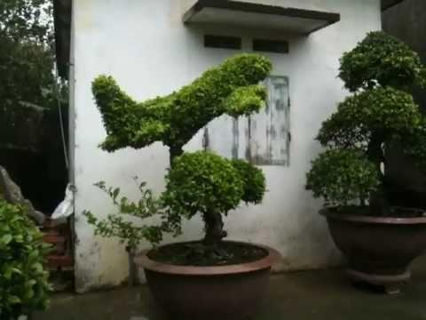 Phim Lau Xanh Tren Tuoi Lauxanh Sinh Vien Vxv Videos