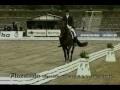 Florencio stallion