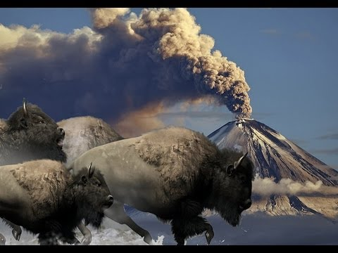 Bison Run from Supervolcano - Music Video