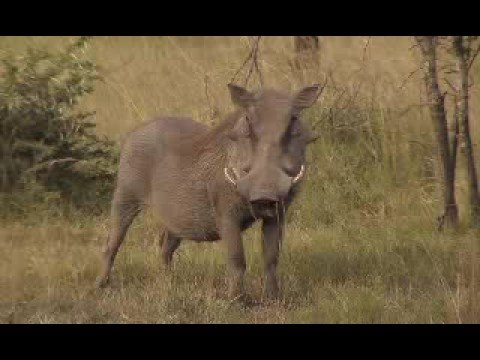 Pumba Game Reserve Video