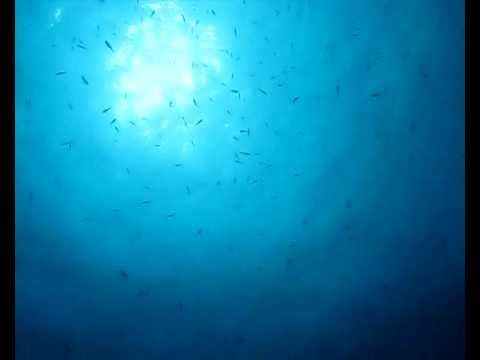 Diving, SCUBA, SCUBA diving, buceo, plongée, tauchen, underwater, underwater video, videosub, sea, mar, mer, blue, Thierry David, Deep Sea Green