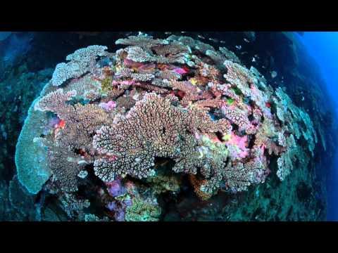 Wild Spirit: Marine Wildlife Course 2014   South Africa & Mozambique